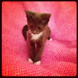 Dinah the Kitten on Hot Pink Honeycomb blanket