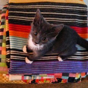 Dinah the Kitten on Missoni blanket