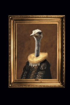 Ostrich Canvas by Angela Rossi